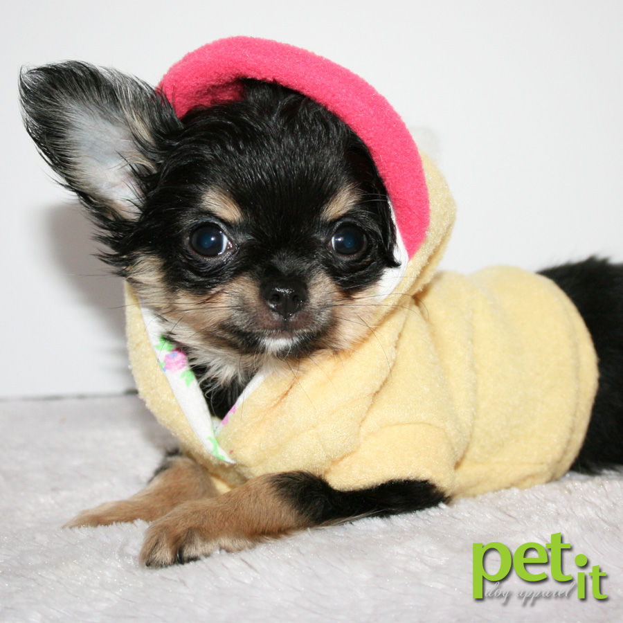 Petit Chihuahuas - Puppies for Sale
