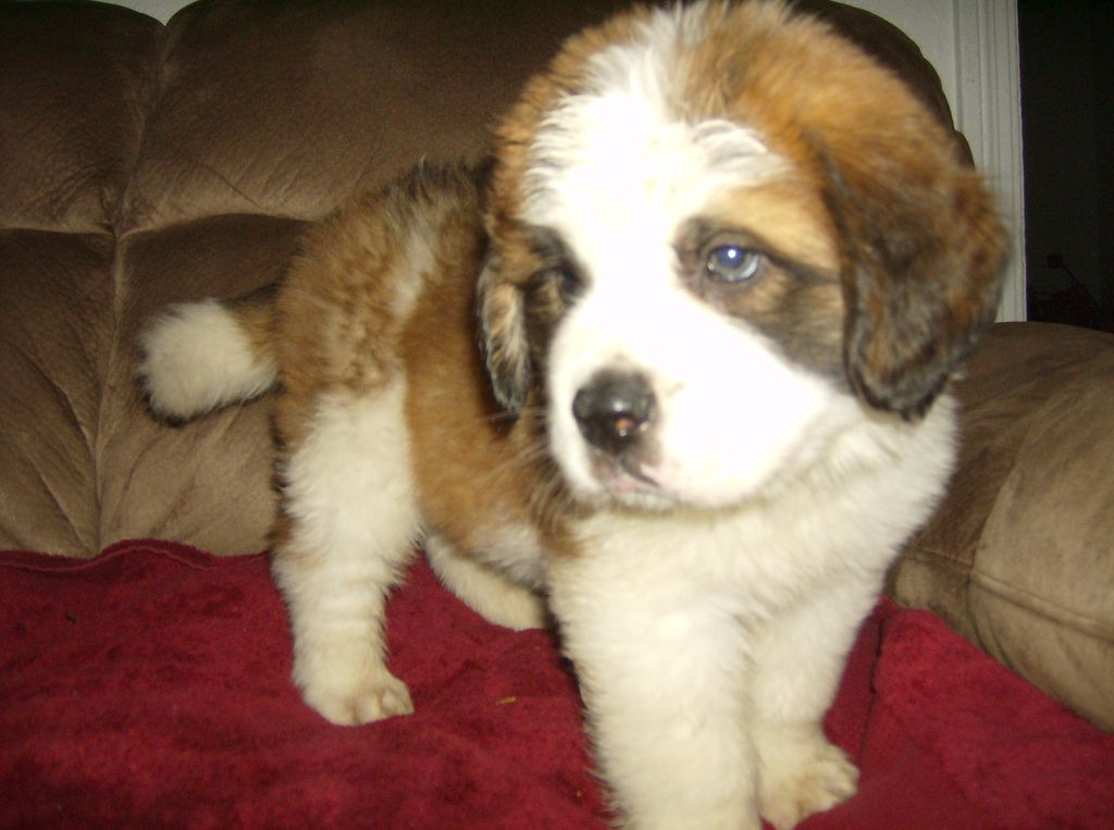 ... pomsky breeders and pomsky puppies for sale in milwaukee wisconsin
