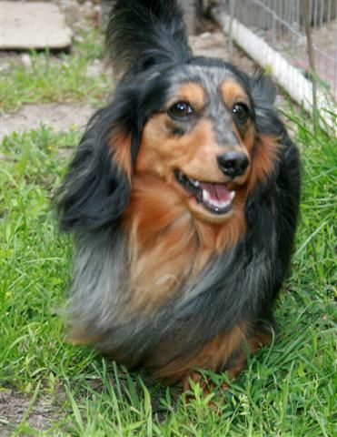 Americanlisted has classifieds in london, kentucky for dogs and
