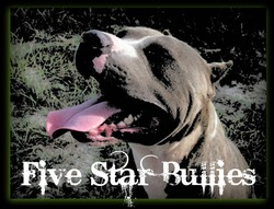 Five Star Bullies