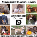Creekside Doxies