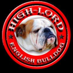English Bulldog Kennel