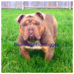 BlueMagicBulldogs