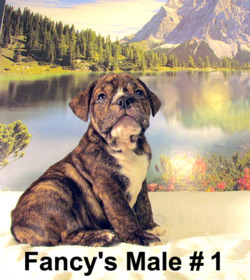 Fancy's Kennel