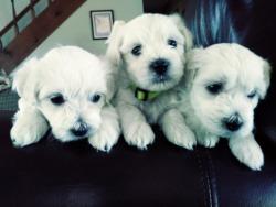 Dog Breeders in South Carolina