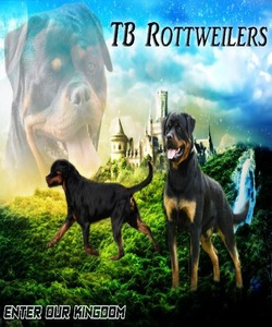 TB Rottweilers
