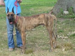 Dog Breeders In Pennsylvania