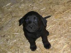 Website Owner Lookup >> Dog Breeders in Montana