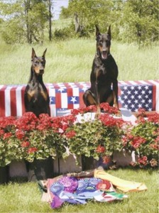 J Bar S Dobermans