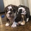 Wrinkle Shack Bulldogs
