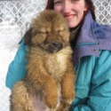 Sheba Girls 1-5 - a Tibetan Mastiff puppy
