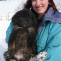 Shadow Girl 1&2 - a Tibetan Mastiff puppy