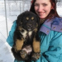 Nova Boys 1-3 - a Tibetan Mastiff puppy