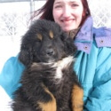 Kona Girls 1-3 - a Tibetan Mastiff puppy