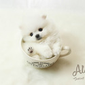 Teddy - Teacup Pomeranian Puppies For Sale - a Pomeranian puppy