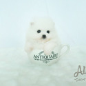 Teacup Toy Pomeranian for sale [Marshmallow] - a Pomeranian puppy
