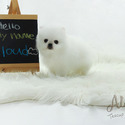 Teacup Mini Pomeranian for Sale [CLOUD] BFCM 20%%OFF - a Pomeranian puppy