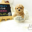 Teacup Mini Poodle for Sale [MUFFIN] BFCM 20%%OFF - a Poodle puppy