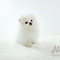 Mini Teacup Pomeranian Puppies For Sale, Gucci - a Pomeranian puppy