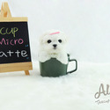 Toy Teacup Maltese Puppies For Sale [Latte] - a Maltese puppy