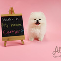 Toy Teacup Pomeranian Puppies For Sale [Cartier] - a Pomeranian puppy