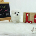 Micro Teacup Maltese Puppies For Sale [Latte] - a Maltese puppy