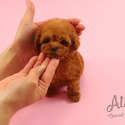 Teacup Toy Poodle Puppies For Sale [Bambi] - a Poodle puppy