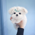 Micro Teacup Maltese Puppies For Sale - a Maltese puppy