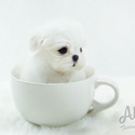 Mini Teacup Maltese Puppies For Sale [Haribo] - a Maltese puppy