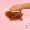 Amazing Dolls Toy Puppies For Sale  [Chloe] - a Poodle puppy