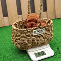 Micro Teacup Poodle Puppies For Sale [Macaron] - a Poodle puppy