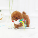 Mini Toy Poodle Puppies For Sale - Toby - a Poodle puppy