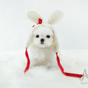 Teacup Toy Maltese Puppies For Sale - Minnie - a Maltese puppy