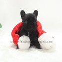 Toy Mini French Bulldog Puppies For Sale - Bella - a French Bulldog puppy