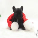 Mini Toy French Bulldog Puppies For Sale - Bella - a French Bulldog puppy